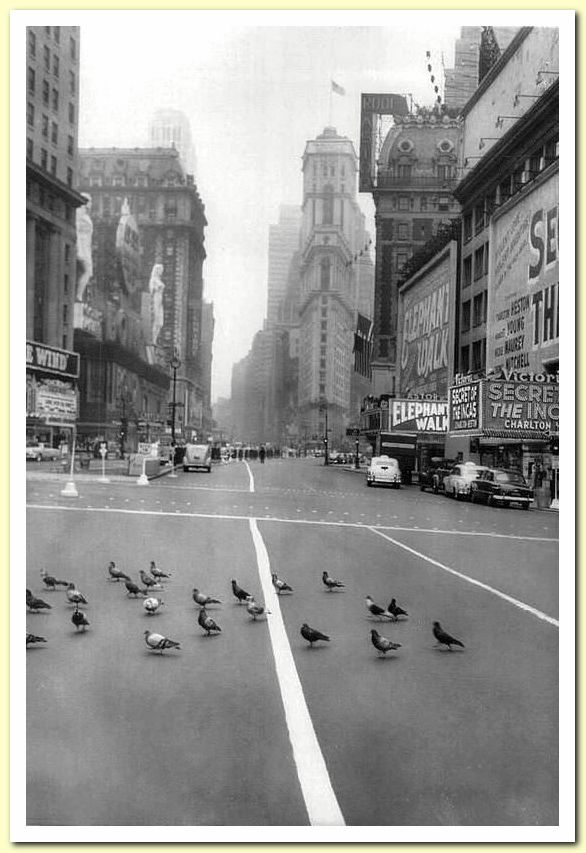 1954 05 May 04 Pigeons in Times Square by Andrew Lopez